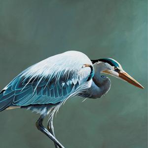 Книга «Такие разные птицы в произведениях искусства»