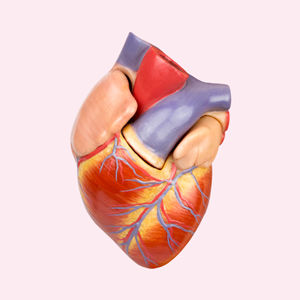 Ушло в пятки: Как заботиться о сердце