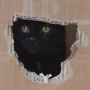 На кого подписаться  в Twitter: Меланхоличный кот «My Sad Сat» — Жизнь на Wonderzine