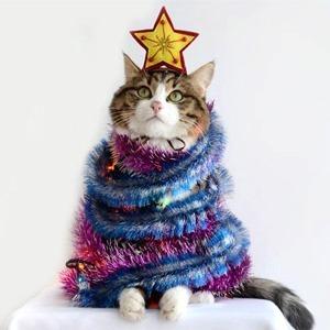 Санта-Мяус: Праздничные коты в новогодних костюмах — Guilty Pleasure на Wonderzine