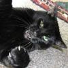 В новом тумблоге кошки борются с феминизмом  (на самом деле нет)