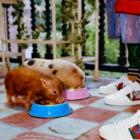 Gucci выпустили лукбук коллекции, посвящённой «Трём поросятам»