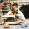 На Тайване запретят есть кошек и собак