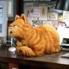 Новые данные: кошкам всё-таки нравится проводить время с людьми