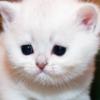 В России могут ограничить количество животных в квартире