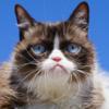 Умерла самая угрюмая кошка в мире Grumpy Cat
