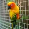 В Бразилии арестовали попугая, который помогал наркоторговцам