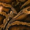 Chanel прекратит использовать экзотическую кожу