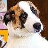 В Москве состоится благотворительная выставка животных из приютов