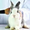В Китае могут отказаться от тестирования косметики на животных