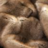 В Нью-Йорке могут запретить продажу изделий из меха