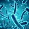 ВОЗ: Россия всё ещё в числе стран с эпидемией туберкулёза