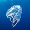 В штате Нью-Йорк введут запрет на использование пластиковых пакетов