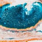 Учёные вылечили рак:  Тест на умение отличать научную правду от лжи