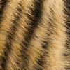Тигрица из зоопарка в Бронксе заболела новым коронавирусом