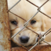 Госдума одобрила закон об ответственном обращении с животными