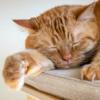 В штате Нью-Йорк запретили удалять когти у кошек
