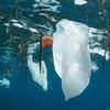 В Атлантическом океане в 10 раз больше пластикового мусора, чем считалось ранее