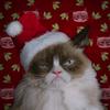 В трейлере фильма  о Grumpy Cat кошка-мем ожидаемо ненавидит всё