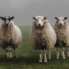 В Великобритании животных законодательно признают разумными существами
