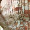 В лесах Амазонии нашли тысячи древних наскальных рисунков