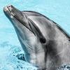Ученые выяснили, что дельфины умеют называть друг друга по имени