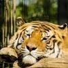 Популяция диких животных сократилась на 60 % за 40 лет