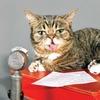 Кошка-мем Лил Баб записала трек в поддержку ЛГБТ-сообщества