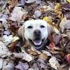 54 % россиян не ощущают упадок сил осенью