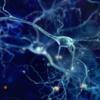 Исследование: диметилтриптамин способствует образованию новых нейронов