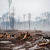 Исследование: действия человека разрушили 97 % экосистем на суше планеты