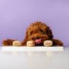Запустилась платформа Pet-à-Porter с товарами для домашних животных