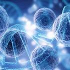 Ученые создали «гибрид» человека и обезьяны