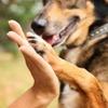 «Юна» проведёт фестиваль по поиску новых хозяев бездомным животным