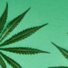 Комиссия ООН исключила каннабис из списка особо опасных наркотиков