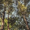 Движение ЭКА запускает акцию «Лес вместо букета» к 1 Сентября