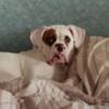 Новые данные: женщины лучше засыпают рядом с собакой, чем с кошкой