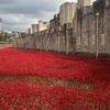 В честь жертв Первой мировой центр Лондона украсят 888 246 маков