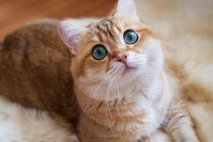 На кого подписаться: Очень круглый кот Хосико
