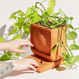 Лето в квартире: Как добавить света и зелени дому
