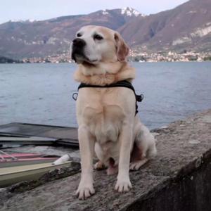 «Dogs»: Самый человечный документальный сериал года