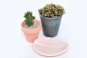 На кого подписаться: Российский магазин с растениями и керамикой Potanica