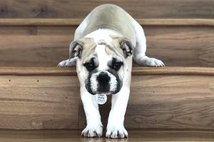 На кого подписаться: Самый добрый рейтинг собак