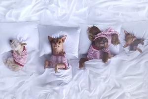 Пародия на клип «Famous» Канье Уэста с участием знаменитых собак