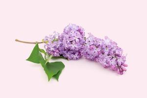 Demeter предлагают выбрать фирменный аромат Москвы