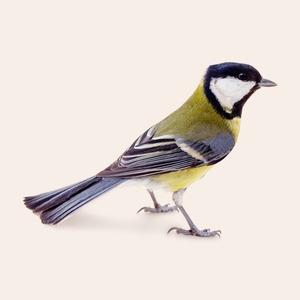 Леттеринг, орнитология  и другие медитативные хобби на каждый день
