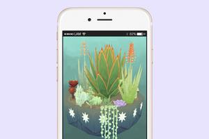 Что скачать: Виртуальный мини-сад суккулентов Viridi