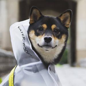 Бобик в Pupreme:  Как одежда для собак завоёвывает модную индустрию