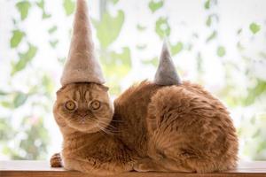 На кого подписаться: Коты в шапках из их собственной шерсти