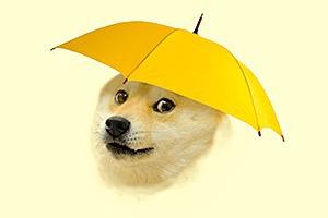 Собака-мем Doge  стала синоптиком
